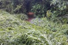 Lommerrijke tuin - Blaricum